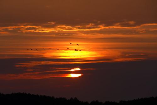 Das BIld zeigt den Sonnenaufgang bei einer Wolkenschicht, vor den Wolken fliegen 13 Vögel von rechts nach Links