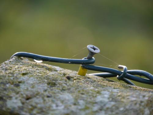 Das Bild zeigt eine Spax-Schraube, die in einem Dübel auf der Spitze eines Betonpfostens sitzt. Um die Schraube ist draht von einem Maschendrahtzaun gewickelt, am Draht ist auf der linken Seite ein Tropfen und über den Schraubenkopf sieht man die Fäden eines Spinnennetzes.