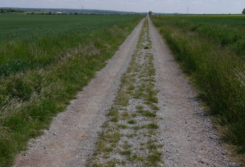 Das Bild zeigt einen Feldweg, der aus zwei festgefahrenen Spuren aus grobem Kies besteht, zwischen den Spuren kämpft sich das Gras durch den Kies. Der Weg führt geradeaus über einen Hügel in die Unendlichkeit des Bildes