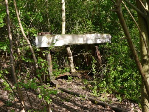 Das Bild zeigt einen alten Prellbock an einem überwucherten Gleis, das Prellbock ist fast völlig zugewuchert, in der Mitte des Prellbocks wächst eine Birke, die am oberen Brett vorbeiwächst