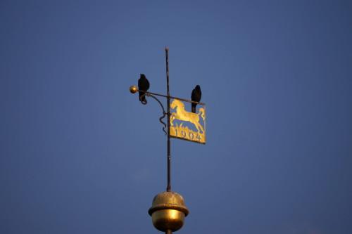 Das Bild zeigt zwei Vögel, die auf dem Windanzeiger einer Kirchturmspitze stehen. In der Windfahne sieht man ein Pferd und die Jahreszahl 1904