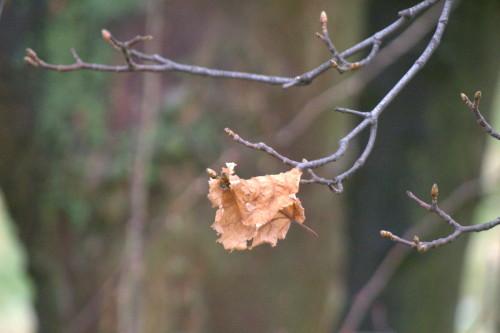 Das Foto zeigt ein einzelnes, vertrocknetes Blatt, welches über einem dünnen Ast liegt.