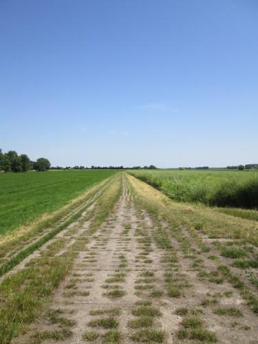 Das Foto zeigt einen Kolonnenfahrweg zwischen grünen Wiesen