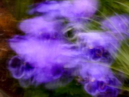 Das Foto ist sehr abstrakt, mann kann erahnen, das es mal blaue Blüten waren, die wild durchmischt wurden