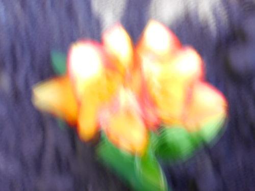 Das abstrakte Foto erinnert an eine verschwommene Tuschezeichung einer Blume mit Gelb/Rot/Orangenen Blüten