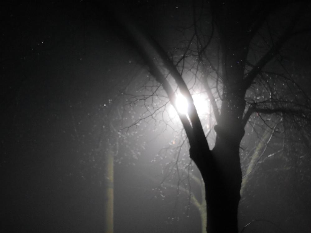 """Das Foto zeigt eine Straßenlaterne bei Nebel, die hinter einem Baum """"versteckt"""" ist"""