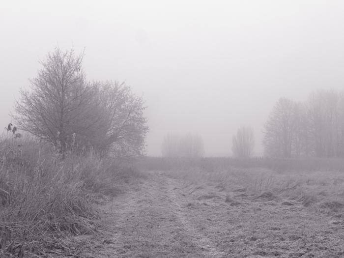 SW-Foto von einem Weg bei Nebel, links seht man am Rand Bäume und auch im Hintergrund kann man Bäume erahnen.