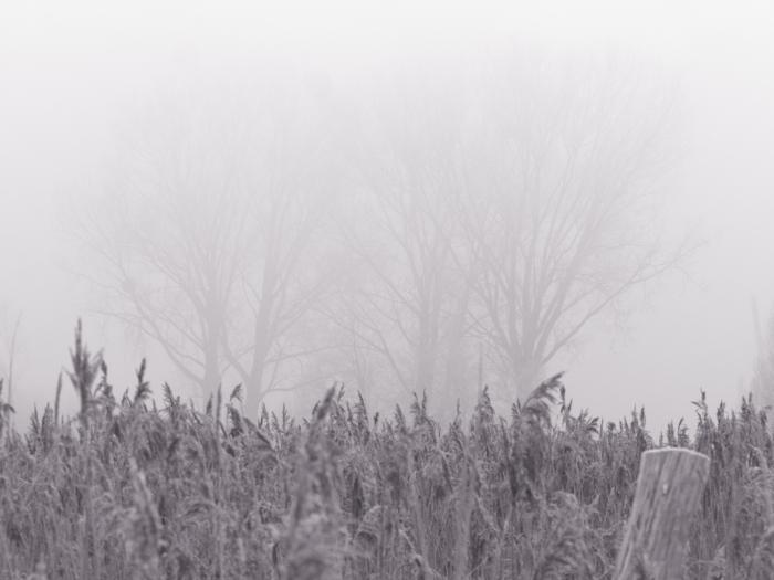 S/W-Foto über einer winterlichen Schilfwiese, im Nebel kann man Bäume erahnen