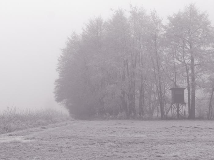 S/W-Foto von einem kleinen Wald, am Waldrand steht ein Hochsitz