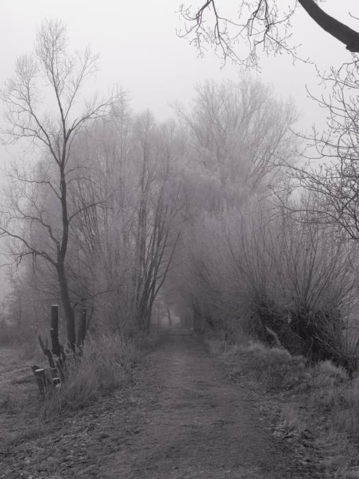 S/W-Foto von einem Weg, auf beidenS eiten kahle Bäume.