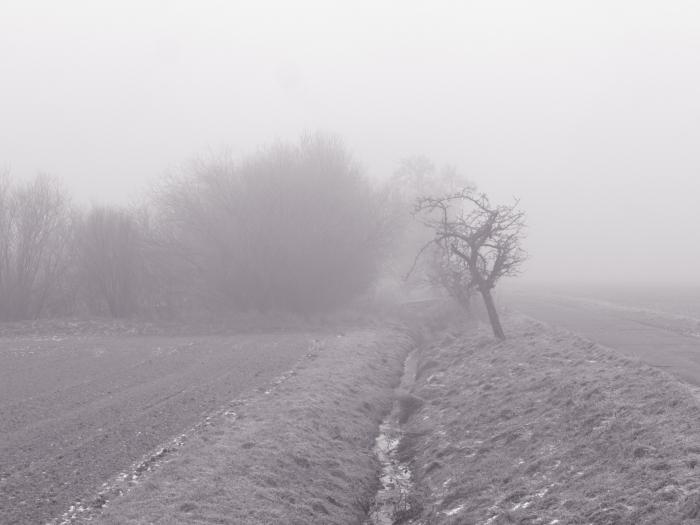 Das S/W-Foto zeigt einen Bach im Nebel, rechts neben dem Bach ist ein Weg und am Bach stehen Bäume