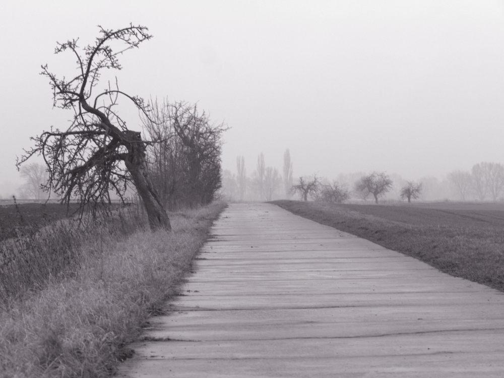 Das s/w-Foto zeigt einen Feldweg bei Nebel, auf der linken Seite ein verknöcherter Obstbaum, hinten im Nebel verschwinden weitere Bäume