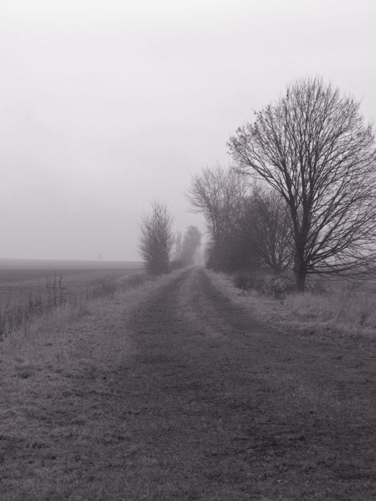 Das s/w-Foto zeigt einen schlechten Feldweg bei Nebel, rechts und LInks stehen Bäume