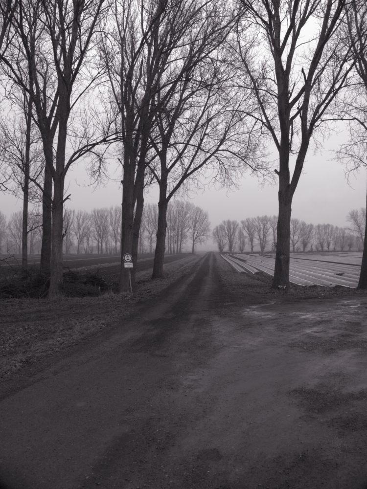 """Das s/w-Foto zeigt einen Feldweg bei Nebel, der zwischen Baumreihen hindurchgeht. Rechts ist ein Spargel-Feld, auf der Linken Seite das """"Verbot für PKW und Motorräder""""-Verkehrsschild"""
