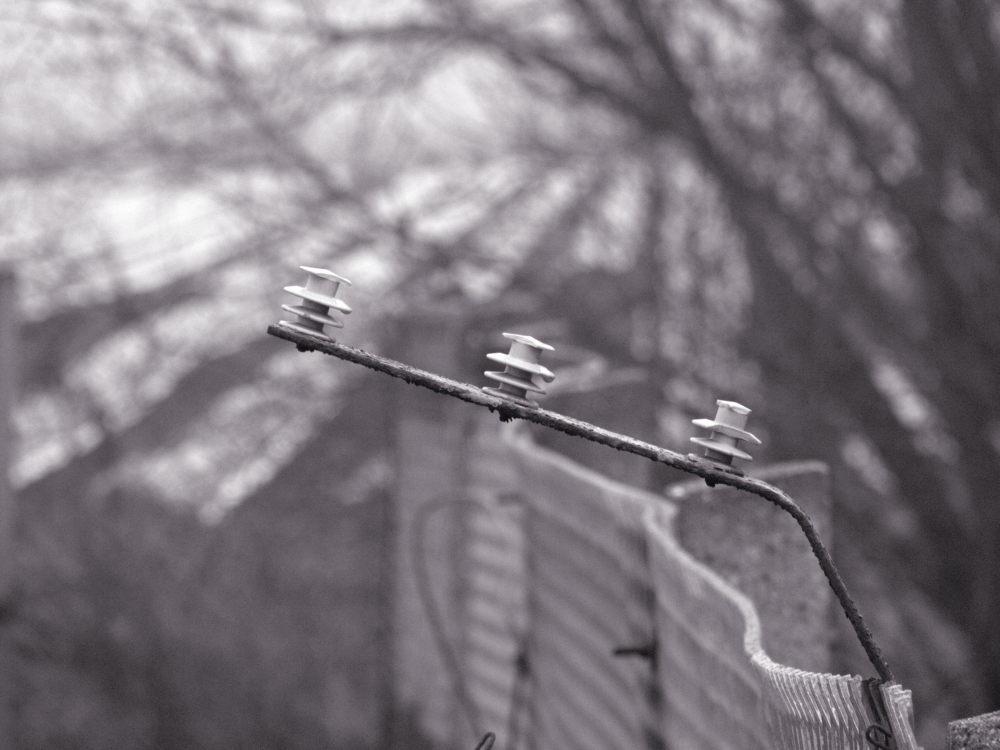 Ein Isolater für den ehem. stromführenden Draht an einem der Grenzzäune
