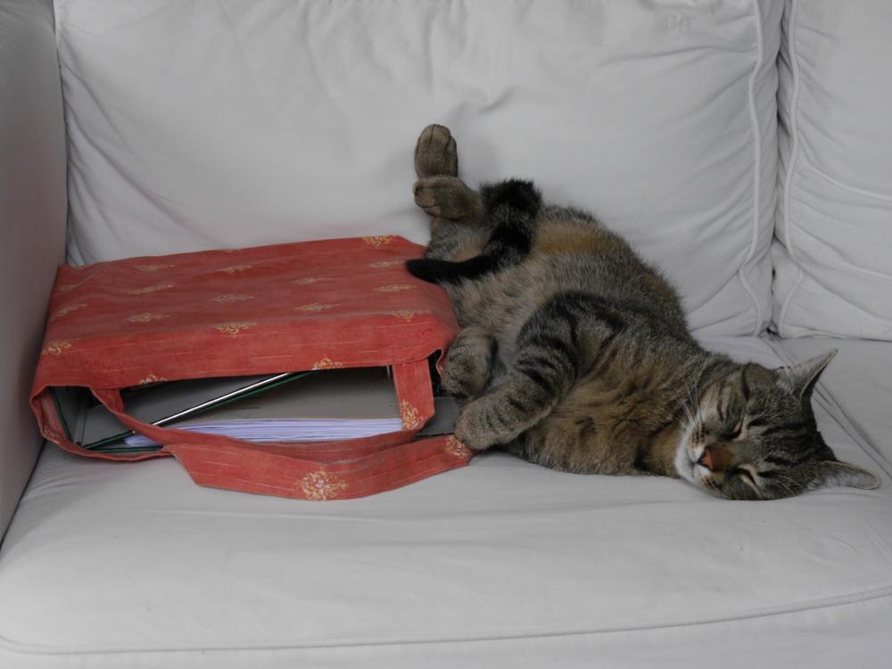 Das Foto zegit eine Katze, die neben einer roten Tasche auf dem Sofa liegt und schläft. In der Tasche sind Aktenordner erkennbar.