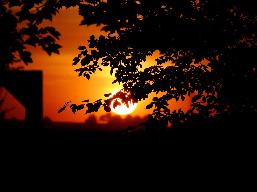 """Das Foto zeigt einen Sonnenuntergang, im Vordergrund sind schwarze Blätter, im Hintergrund die sonne, welche Bäume """"berührt"""""""