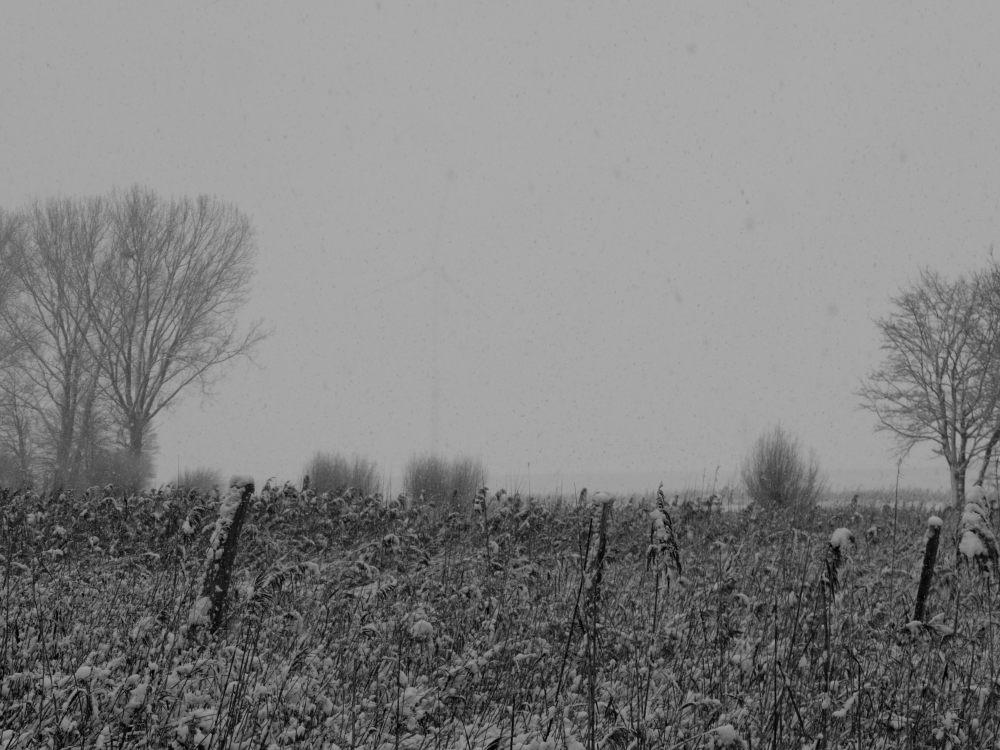 Das s/w-Foto zeigt eine Landschaftsaufnahme bei Schnee und Nebel, im Vordergrund verblühtes Schilf, im Hintergrund kann man ein Windrad erahnen.