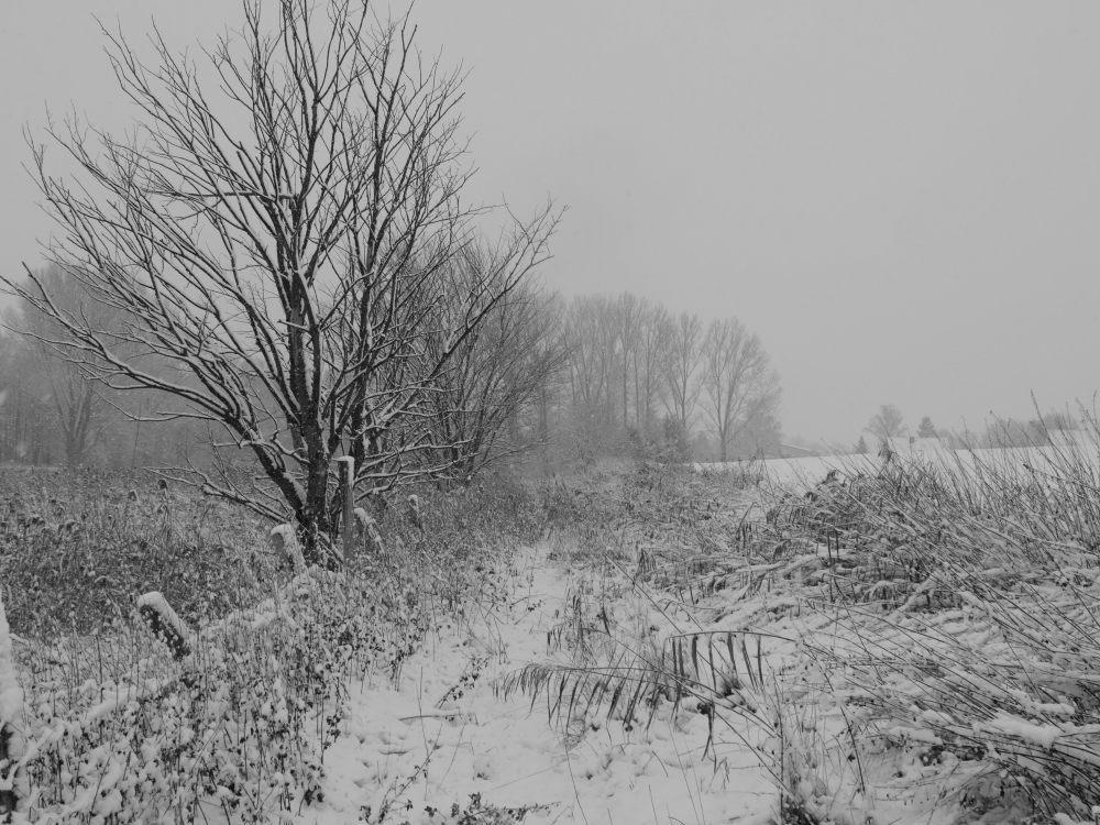Das s/w-Foto zeigt eine Landschaftsaufnahme eines überwuchteren Wegs bei Schnee und Nebel.