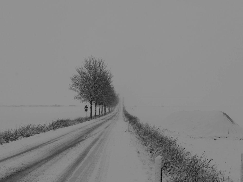 Das s/w-Foto ist die Landschaftsaufnahme einer Straße bei Schnee und Nebel, die Straße geht einen Berg hoch, auf der LInken Seite sind Bäume