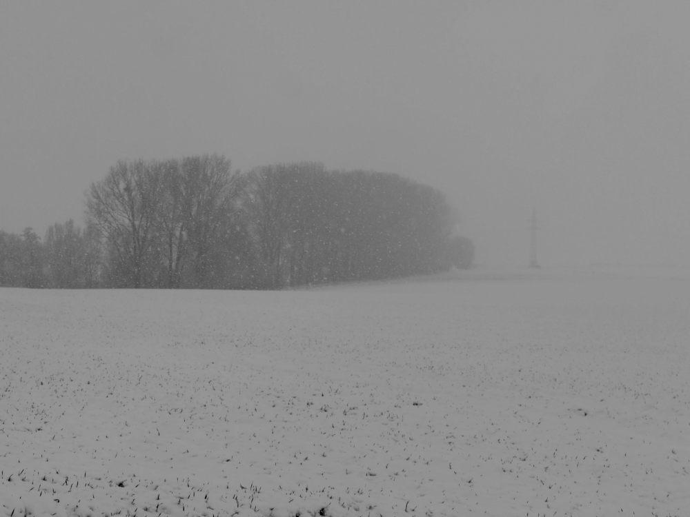 Das s/w-Foto zeigt eine Landschaftsaufnahme bei Schnee und Nebel, eine Baumreihe verschwindet im Nebel.