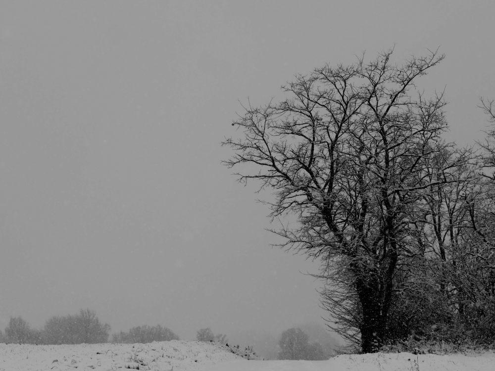 Das s/w-Foto zeigt einen Baum bei sSchnee und Nebel.