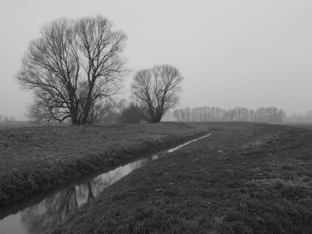 Das s/w-Foto ist eine Landschaftsaufnahme bei leichtem Nebel, von der linken unteren Ecke aus geht ein Bach durch das Bild, man erkennt kahle Bäume und der Horizont verschwindet im Nebel.