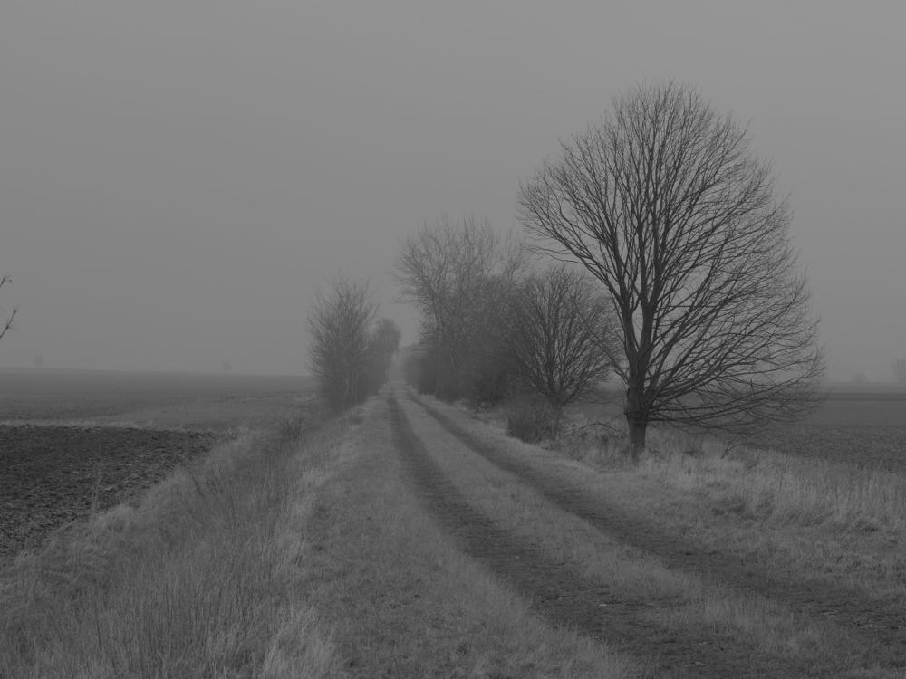 Die Aufnahme eines Feldwegs bei leichtem Nebel, rechts und links vom Feldweg stehen kahle Bäume. Weiter hinten verschwindet der Feldweg im Nebel.