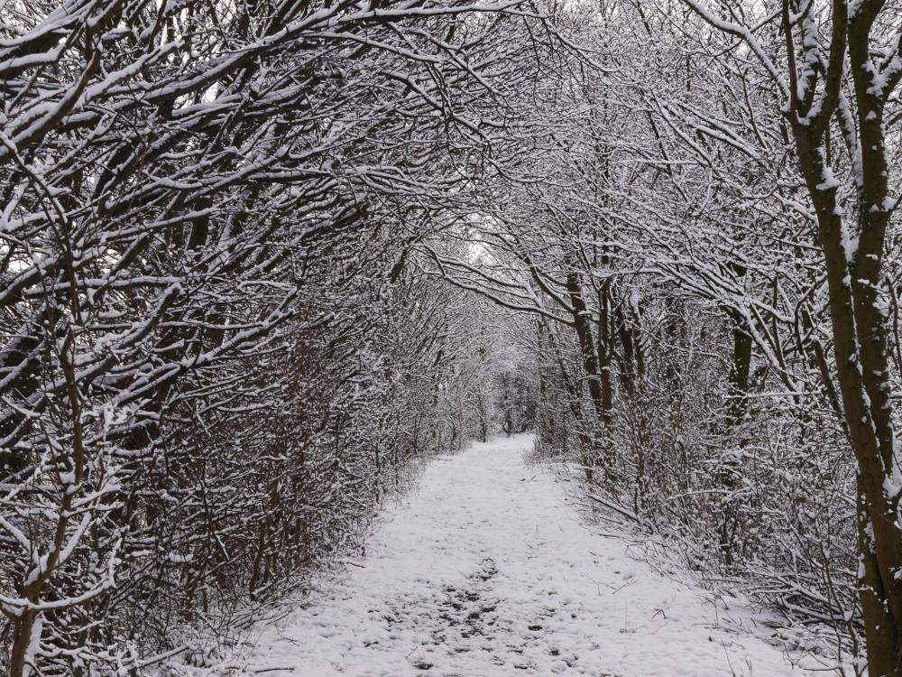 Ein Winterfoto von einem Weg zwischen Bäumen und Büschen, der Weg geht nach rechts.