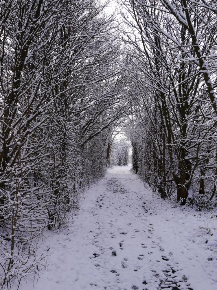 Ein Winterfoto, ein Weg zwischen Bäumen und Büschen, im Schnee sieht man Fuß- und Pfotenspuren.