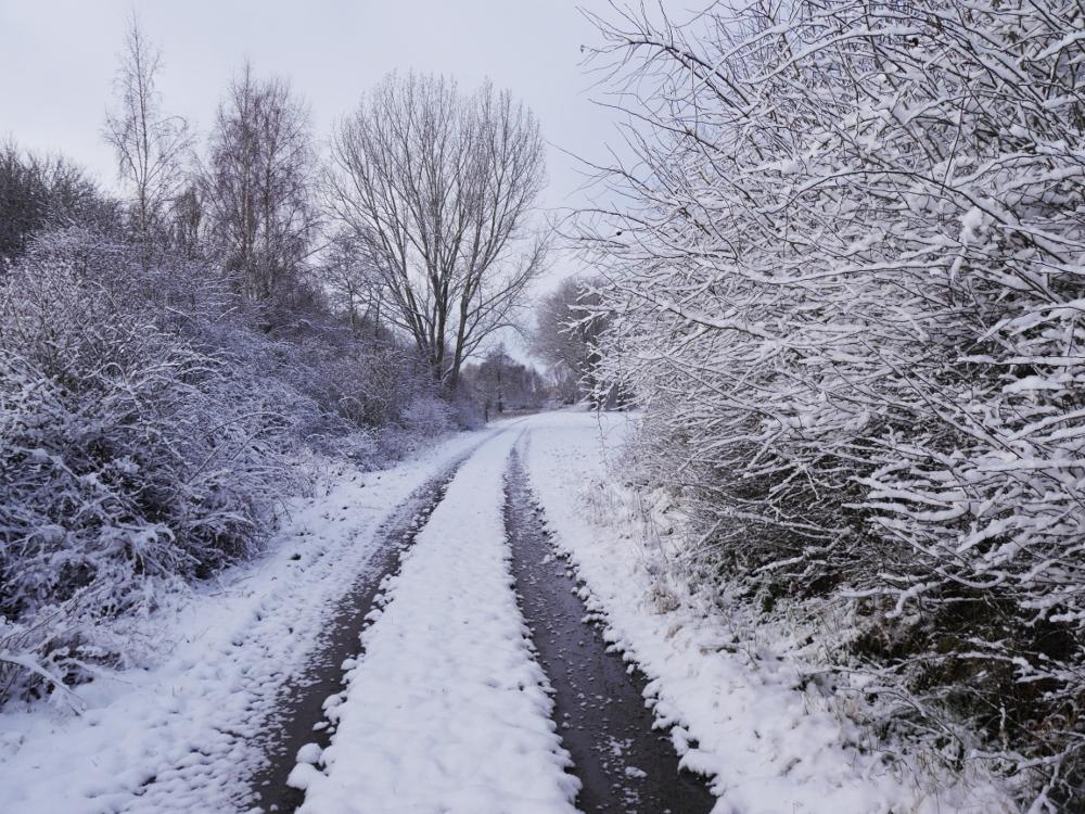 Ein Winterfot, ein Feldweg mit zwei Fahrspuren und rechts und links sind Büsche, auf denen Schnee liegt.