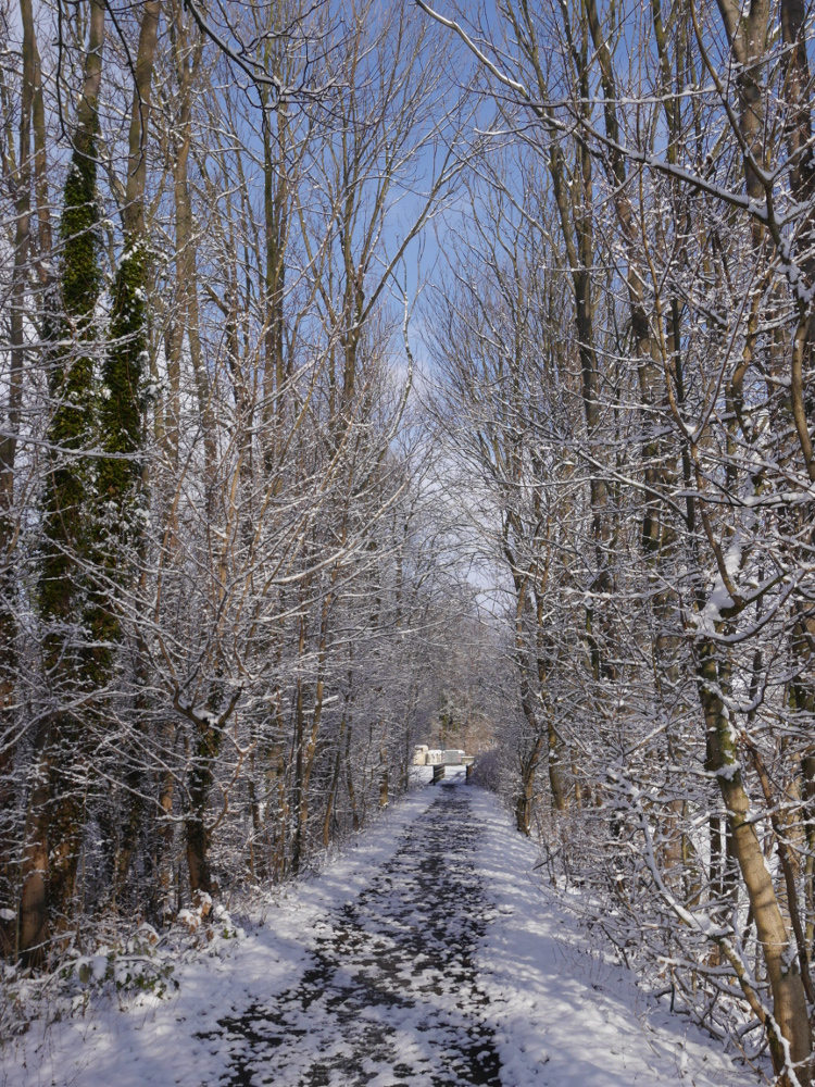 Ein Winterfoto, wein Wanderweg der zu einer Brücke führt, rechts und links sind Büsche und Bäume mit Schnee.