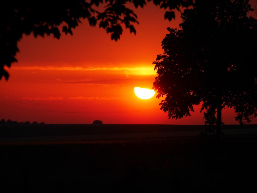 """Das Foto zeigt einen roten, """"blutigen"""" Sonnenuntergang zwischen Bäumen"""
