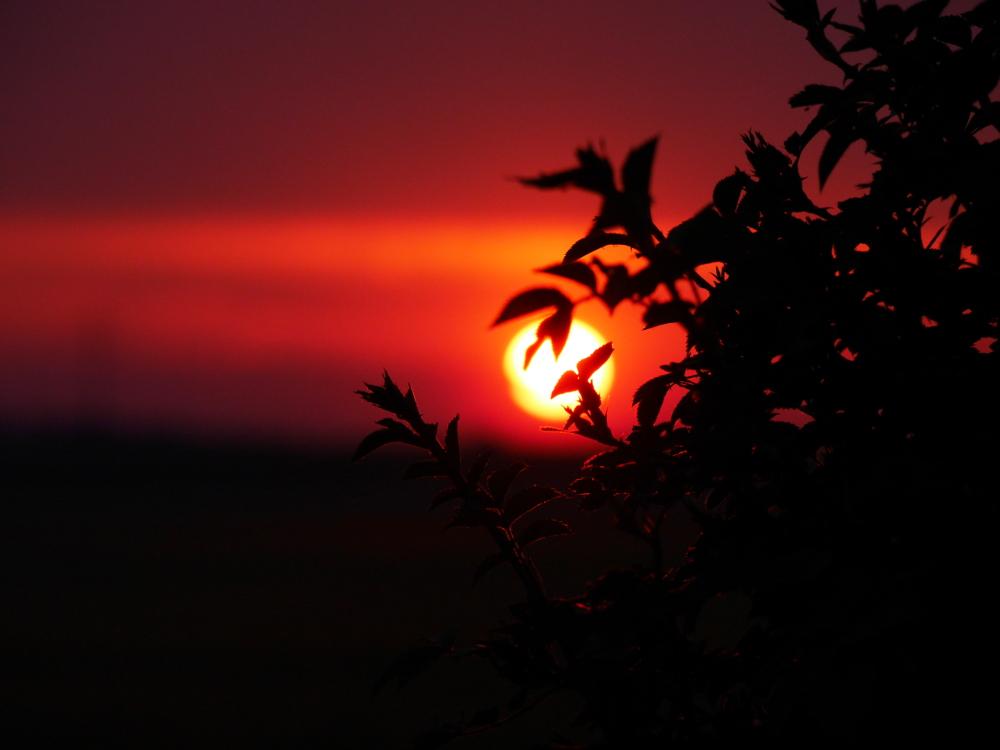 Das Foto zeigt einen Sonnenuntergang hinter Blättern