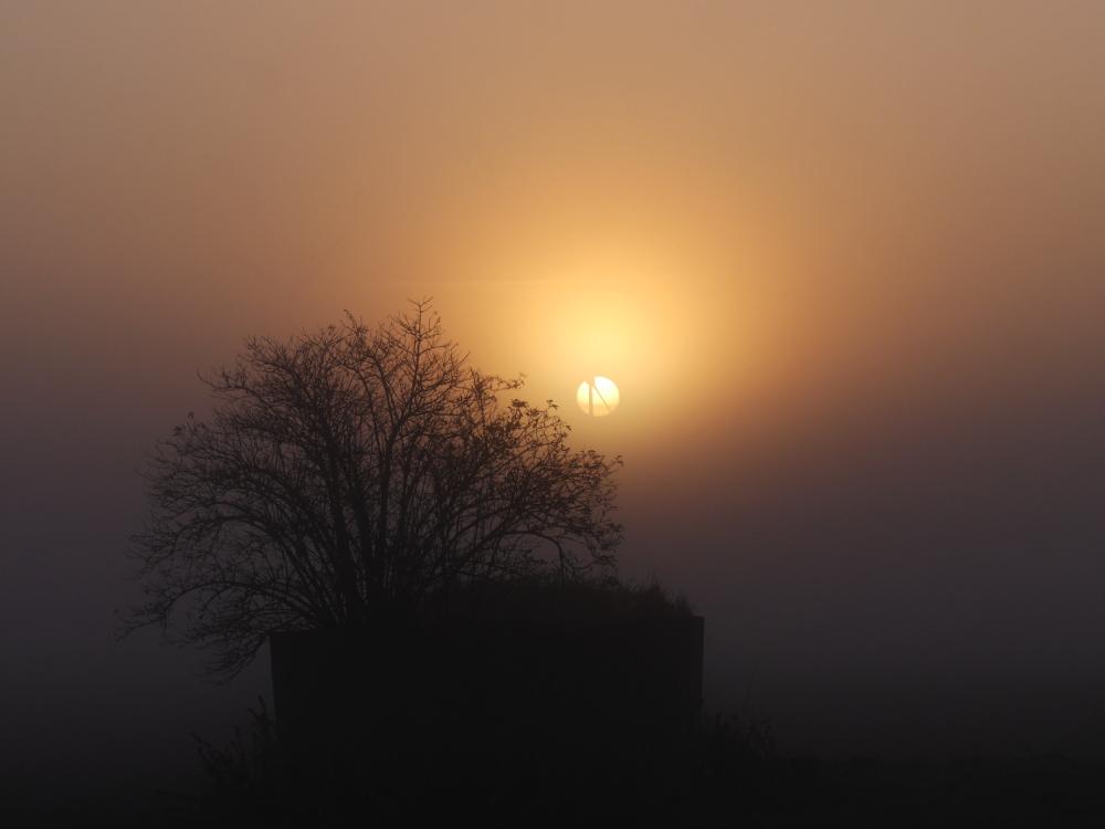 Das Foto zeigt einen Sonnenuntergang im Nebel, durch die Sonne geht ein Windrad, im Vordergrund ist ein Gebüsch