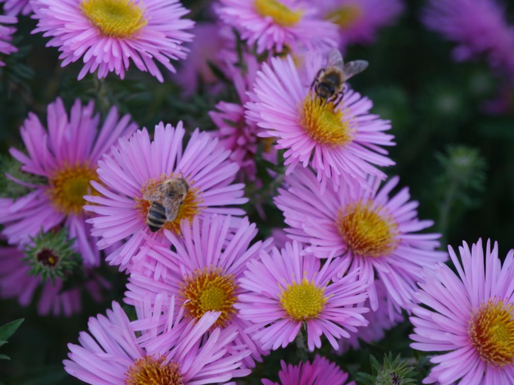 """Dasa Foto zeigt zwei Wespen, welche Blüten """"abernten"""""""
