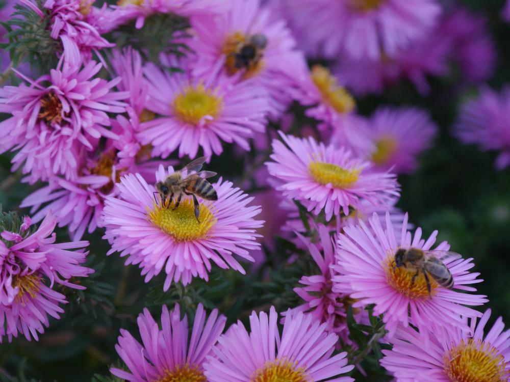 """Das Foto zeigt Wespen, welche Blüten """"abernten"""""""