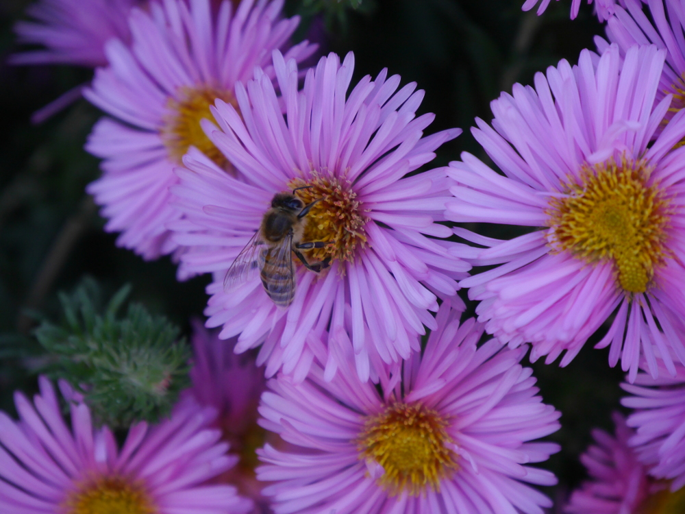 """Dasa Foto zeigt eine Wespe, welche eine Blüte """"aberntet"""""""