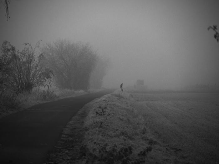 Dasa s/w-Foto zeigt einen Feldweg, der in den Nebel führt. Auf einem Begrenzungspfosten sitzt ein großer Greifvogel.