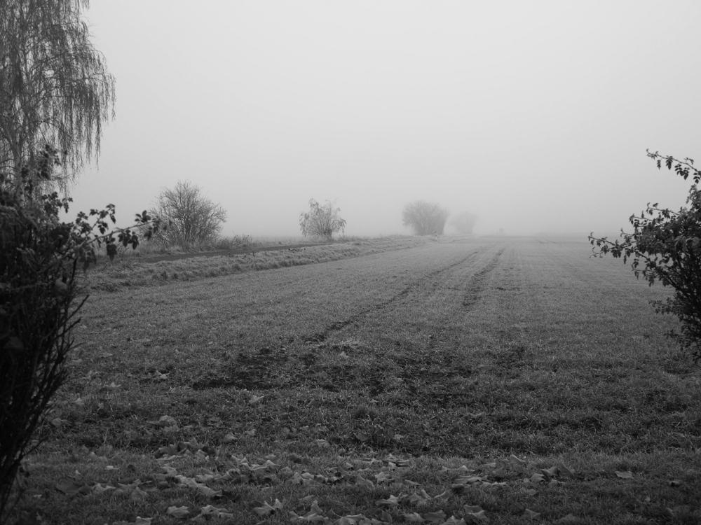 Das Foto zeigt ein Feld, welches im Nebel verschwindet. Entlang des Felds ist ein Feldweg, an dem einige Büsche stehen. Links und rechts im Bild sieht man Büsche.