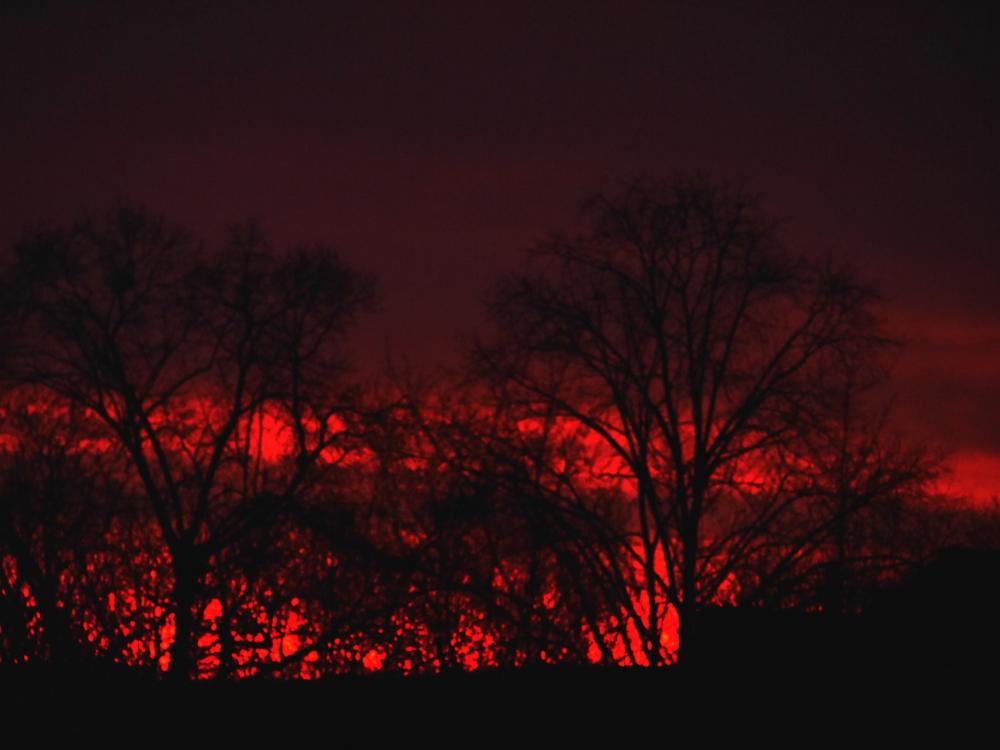 Das Foto zeigt das erste Rot des Sonnenaufgangs hinter Bäumen, es ist früh und daher noch recht dunkel...
