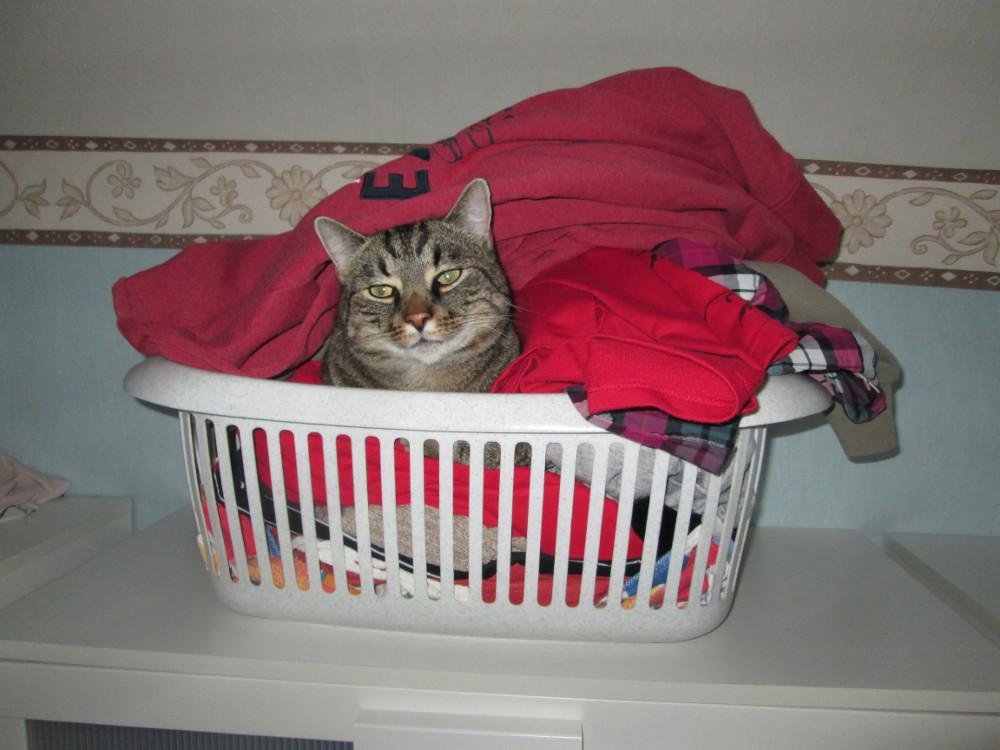 Das Foto zeigt einen Kater, der in einem gut gefüllten Wäschekorb liegt und in Richtung der Kamera blickt.