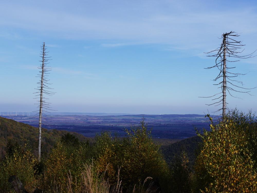 Dasa Foto zeigt eine Landschaftsaufnahme im Harz, der Blick vom Berg runter in das Harzvorland. Rechts und Links im Bild sind kahle, krumgewachsene Bäume