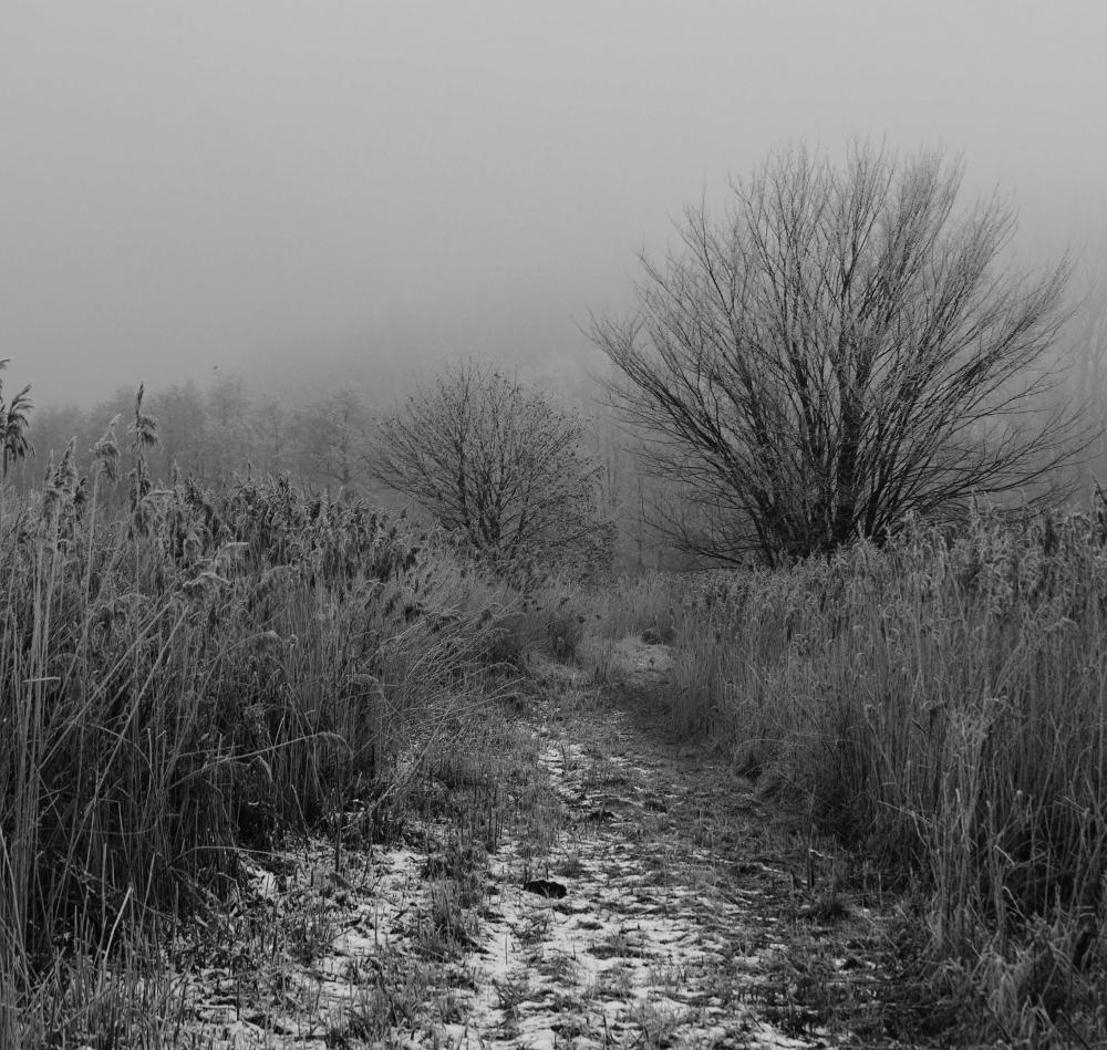 Eine s/w-Landschaftsaufnahme im Nebel, der einfache Weg führt durch Wiesen und Büsche, man sieht ein klein wenig Schnee.
