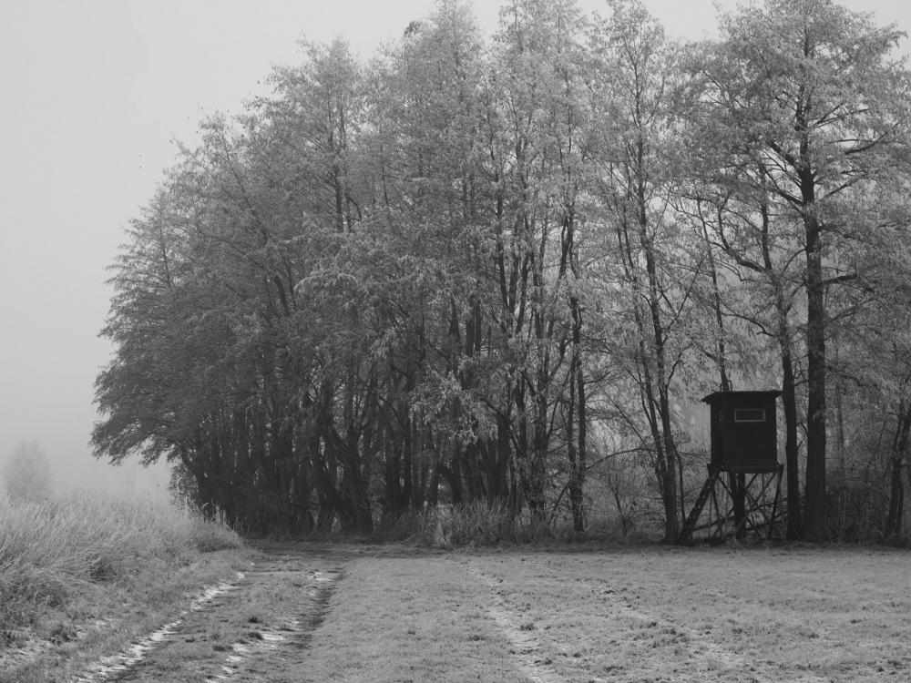 Eine s/w-Landschaftsaufnahme am Waldrand, man sieht auf der rechten Seite einen Hochsitz.