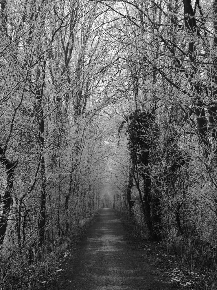 Eine s/w-Aufnahme von einem Weg, der zwischen Bäumen entlang geht. Es ist Winter und man sieht die kahlen Äste mit viel Weiß...