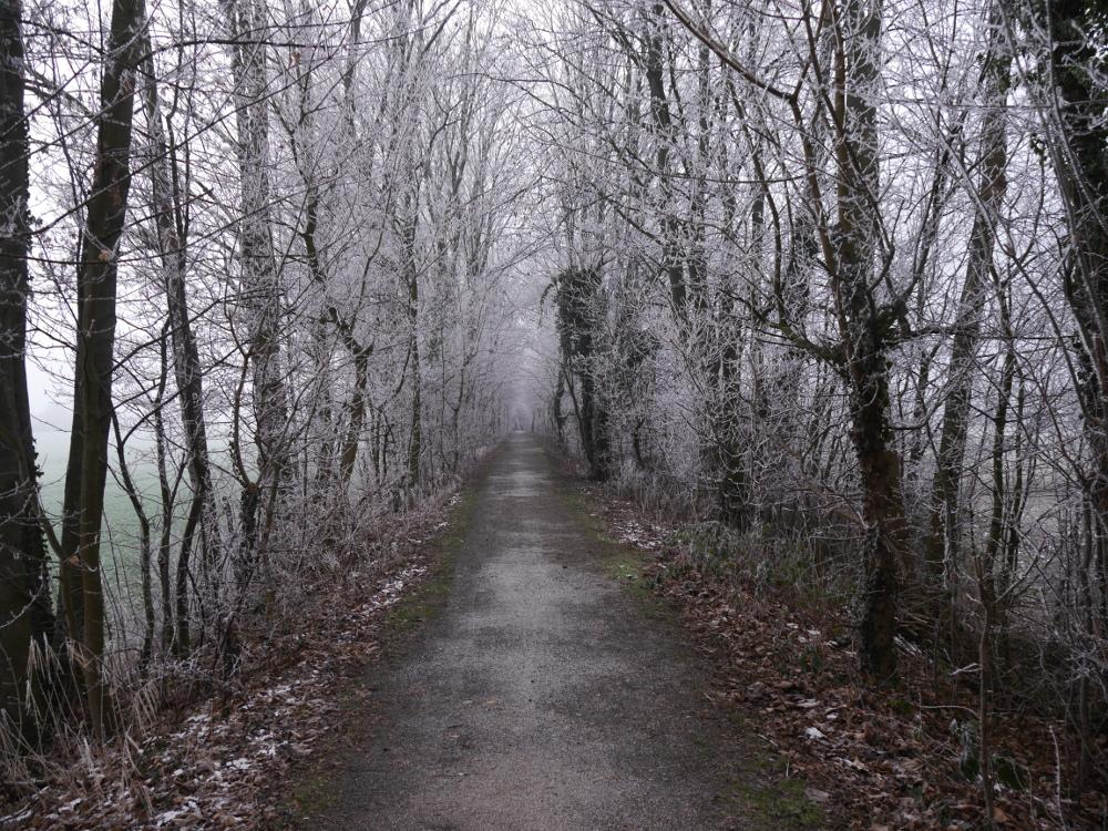 Das Foto zeigt einen Weg, der auf einem alten Bahndamm verläuft. Rechts und Links wachsen Bäume. Es ist ist Winter, und die Äste der Bäume sind kahl und vom Reif überzogen weiß.