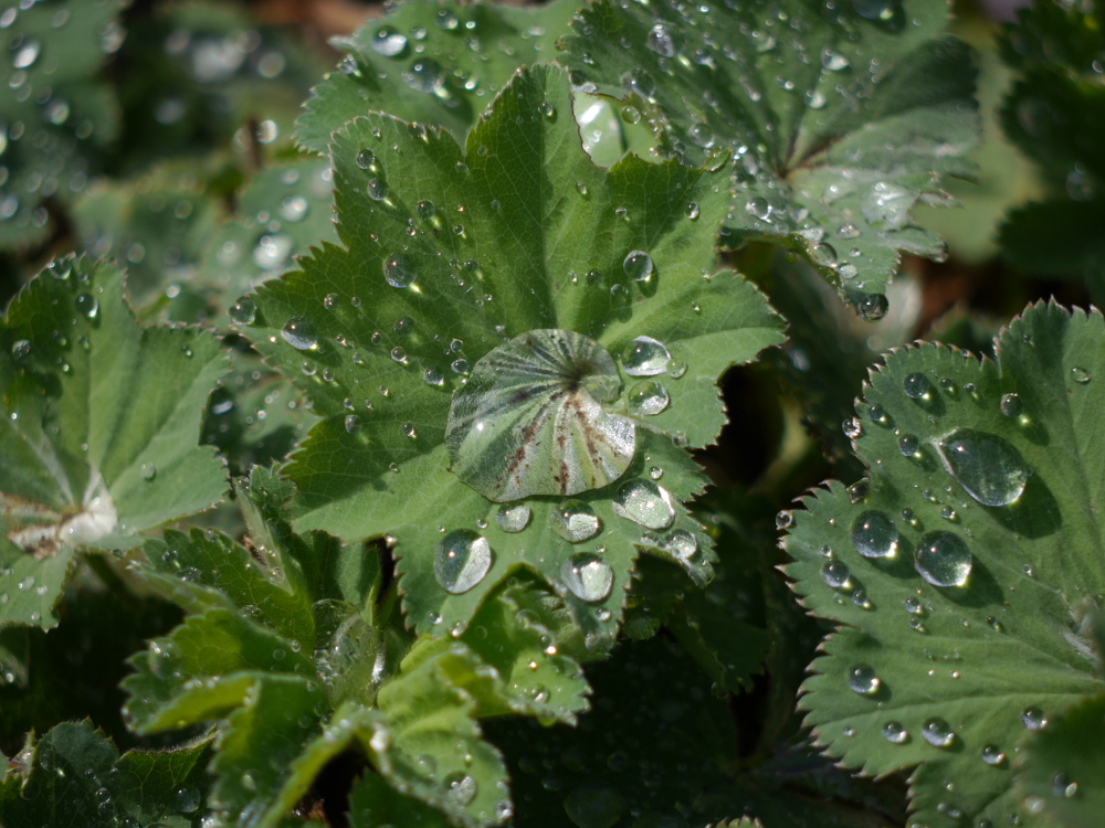 Dasa Foto zeigt Wassertropfen auf grünen Blättern