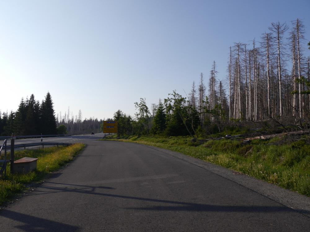 Ein Blick von einem Parkplatz im Nationalpark Harz, rechts und links der Strasse sieht man tote, stehende Bäume