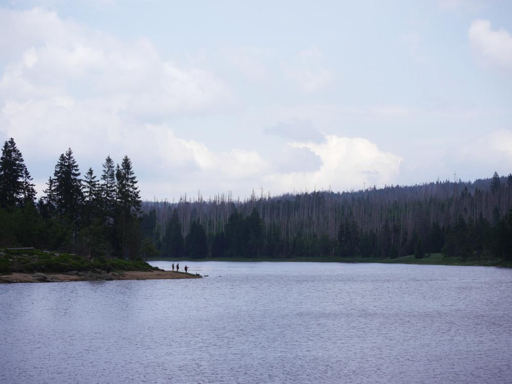 Am Oderteich, man sieht den Teich einige Menschen und zwei Hunde am Strand, im Hintergrund Bäume. Ein Teil ist tot, aber dazwischen wachsen neue Bäume.